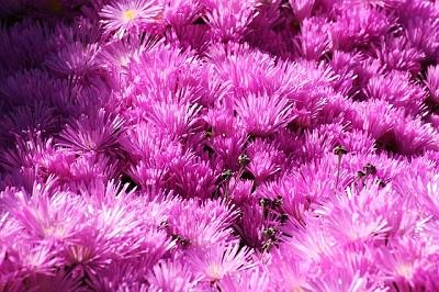 En vacker blomma